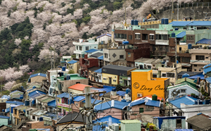 Springtime In Gamcheondong