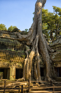 Ta Prohm - Photo #1